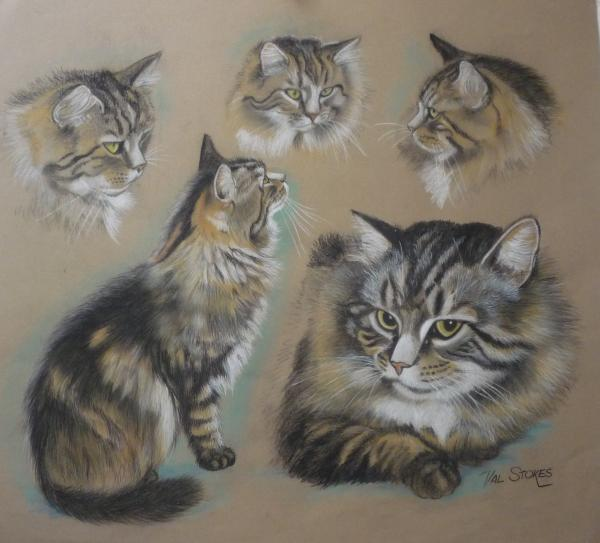Val Stokes - FaA Cat Collage