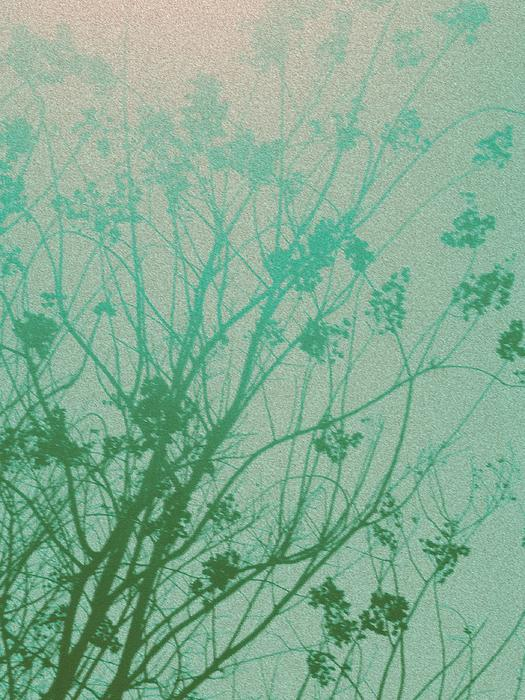 Fading Light Print by Bethany Fulford