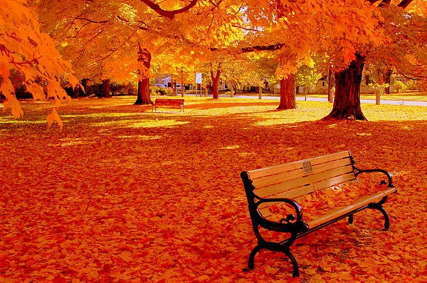 Fall Bench  Newburyport Ma Print by Suzanne DeGeorge