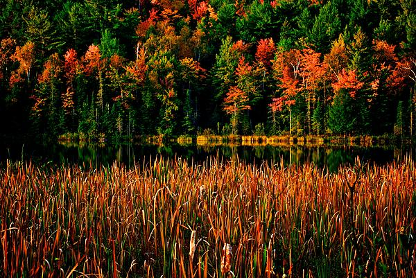 Fall Colors Print by Andre Faubert