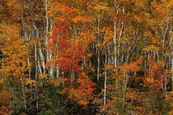 Fall Colors Grand Mesa Print by Ernie Echols