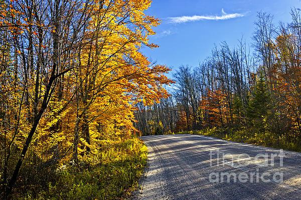 Elena Elisseeva - Fall forest road