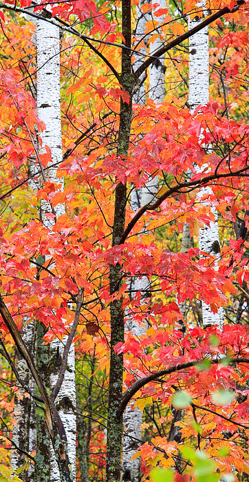 Fall Layers II Print by Adam Pender