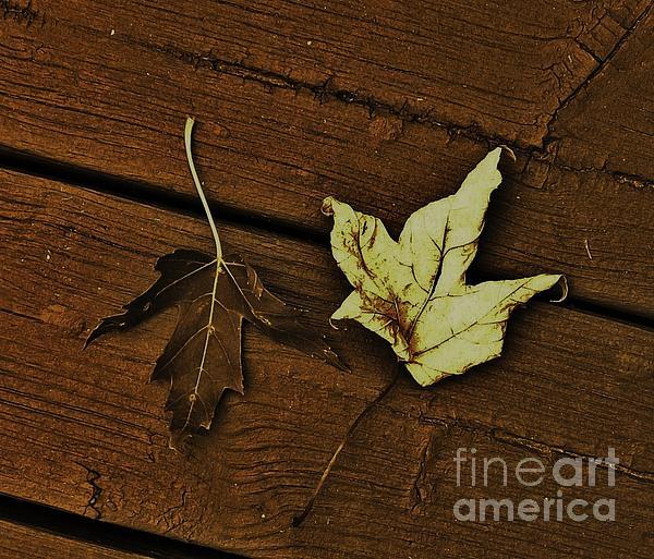 Marsha Heiken - Fall Leaves Abstract