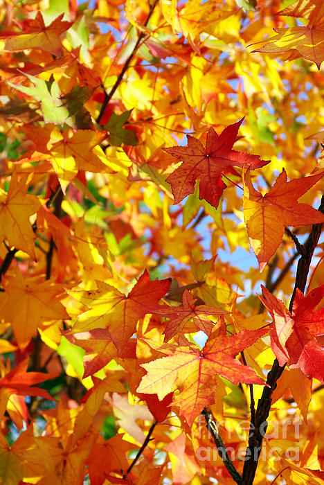 Fall Leaves Background Print by Carlos Caetano