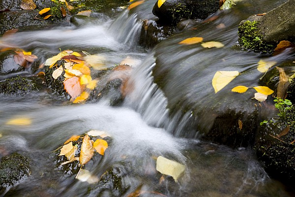 Fall Leaves In Rushing Water Print by Craig Tuttle