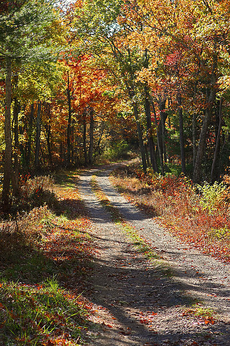 Fall On The Wyrick Trail Print by Denise Romano