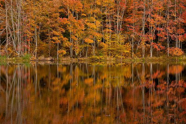 Fall Reflection Print by Karol  Livote