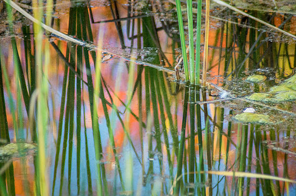 Bill Pevlor - Fall Reflections
