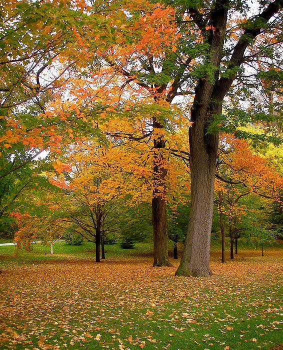 Stephanie Moore - Fall Trees