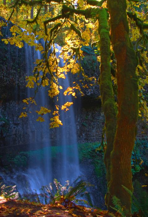 Dale Stillman - Falls in the Fall
