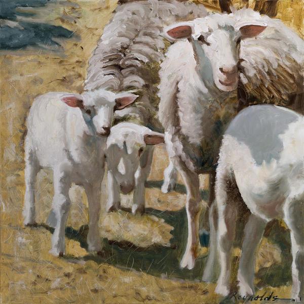 Family Of Sheep Print by John  Reynolds