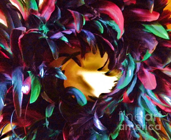 Fancy Feathers Photograph  - Fancy Feathers Fine Art Print