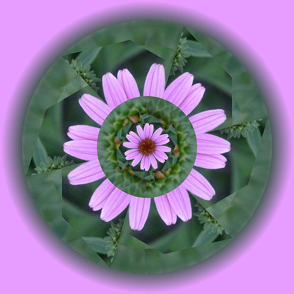 Fantasy Flower Print by Linda Pope