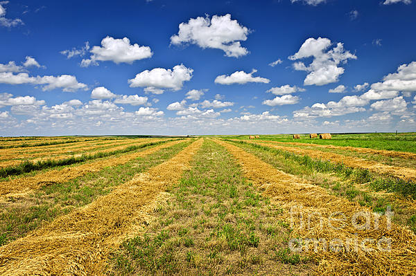 Farm Field At Harvest In Saskatchewan Print by Elena Elisseeva