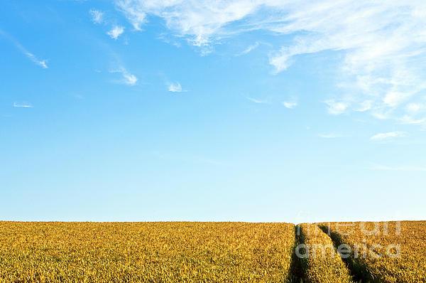 Farmland To The Horizon 1 Print by Heiko Koehrer-Wagner