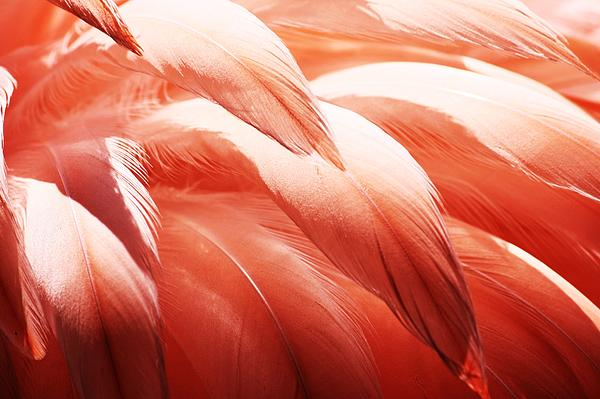 Feathers Print by Paulette Thomas