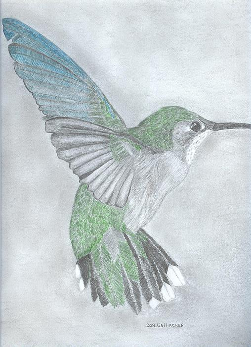 Rufous hummingbird drawing - photo#5