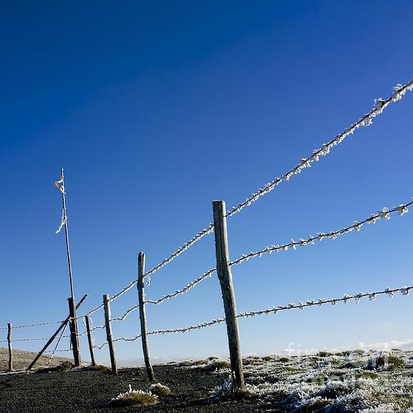 Fence Covered In Hoarfrost In Winter Print by Bernard Jaubert