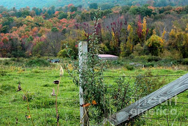 Andrea Simon - Fence in Fall