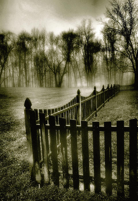 Steven Ainsworth - Fence In Fog