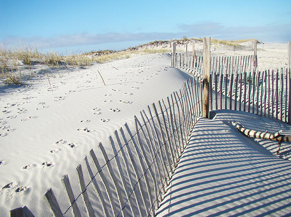 Fences Shadows And Sand Dunes Print by Mother Nature
