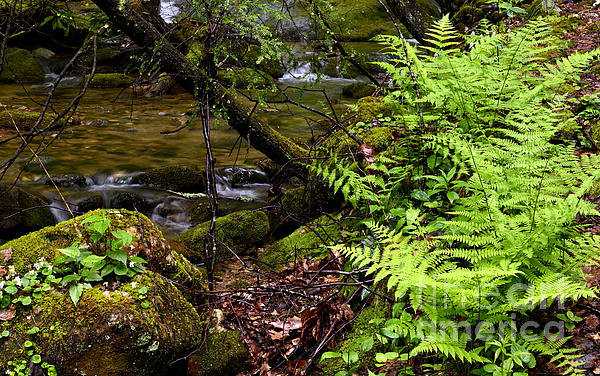 Fern Fallen Log And Stream Print by Thomas R Fletcher