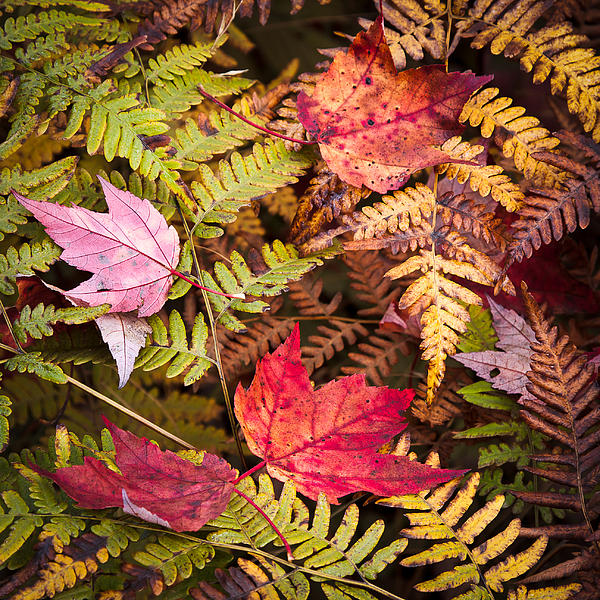 Neil Langdon - Ferns and Autumn Leaves