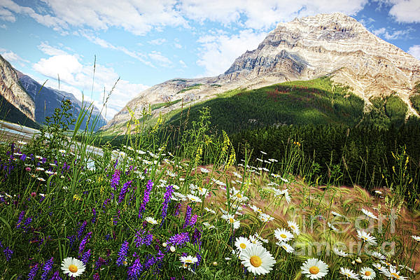 Field Of Daisies And Wild Flowers Print by Sandra Cunningham