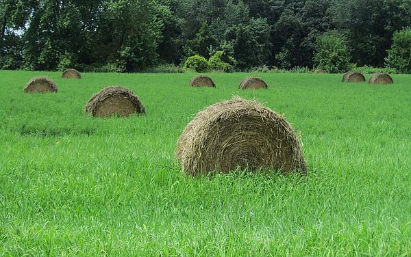 Field Of Hay Print by Todd Sherlock