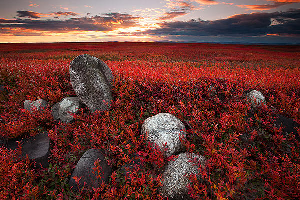 Fields Of Autumn Print by Patrick Downey