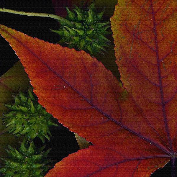 Bonnie Bruno - Fiery Leaf