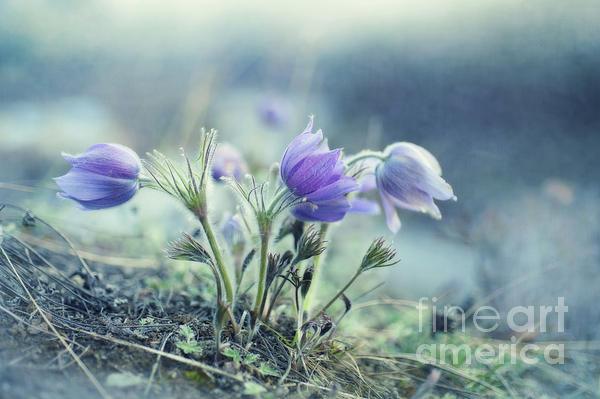 Finally Spring Print by Priska Wettstein