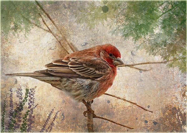 Debbie Portwood - Finch art or Greeting Card blank