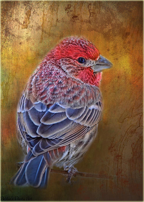 Debbie Portwood - Finch with gold texture