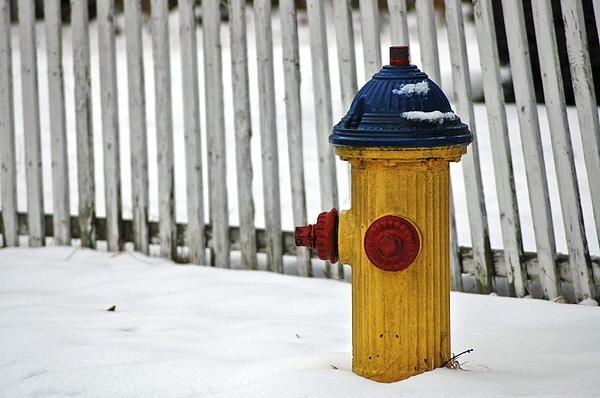 Fire Hydrant Print by Ryan Louis Maccione