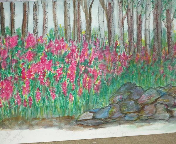 Fireweed By Stonewall Print by Debbie Wassmann