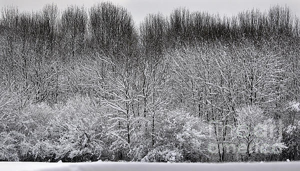 First Snow Print by Diane E Berry