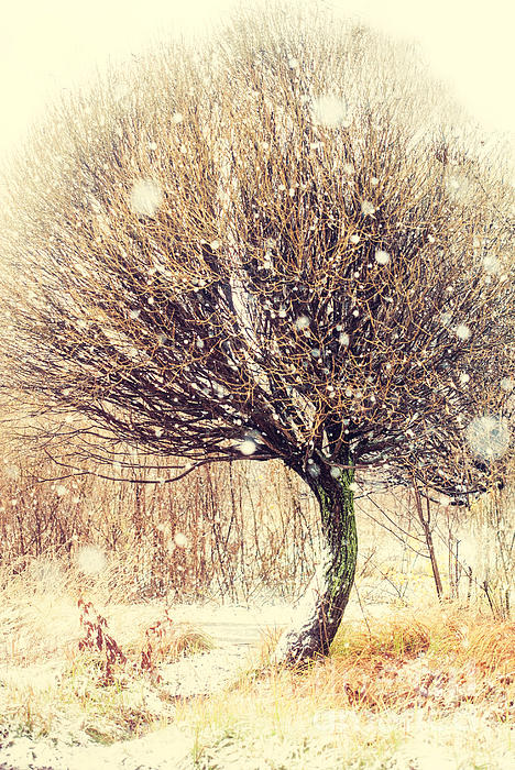 First Snow. Snow Flakes Print by Jenny Rainbow