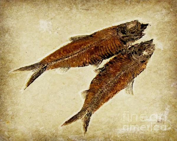 Barbara Henry - Fish Fossil