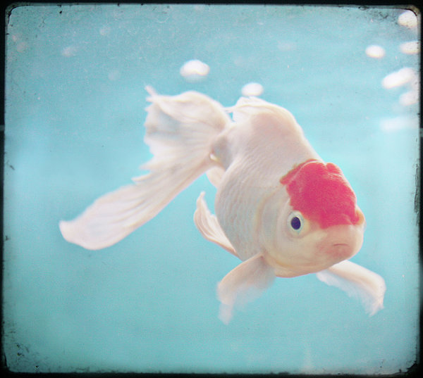 Fish In The Sea Print by photo by Anna Theodora