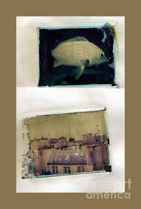 Madeline Ellis - Fish Over Paris