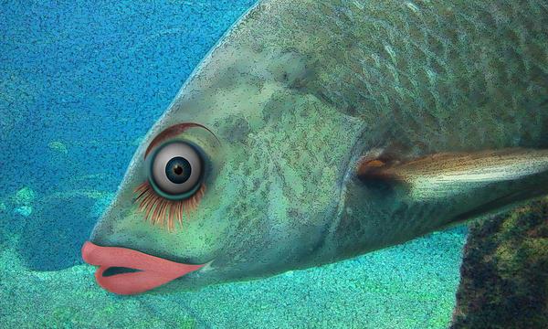 Steve Sperry - Fish Seeking Fish