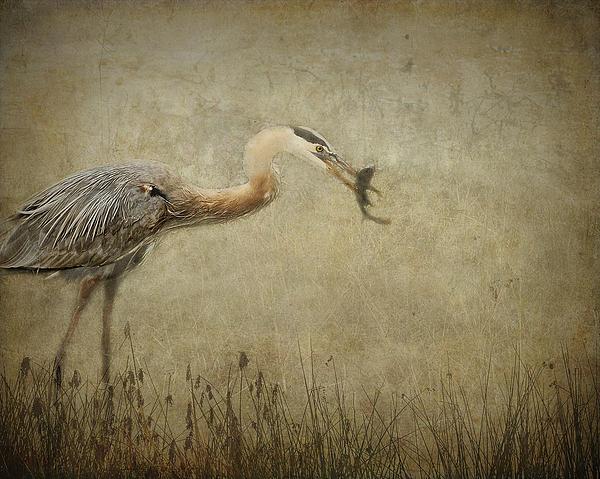 Fishin' Print by Mario Celzner