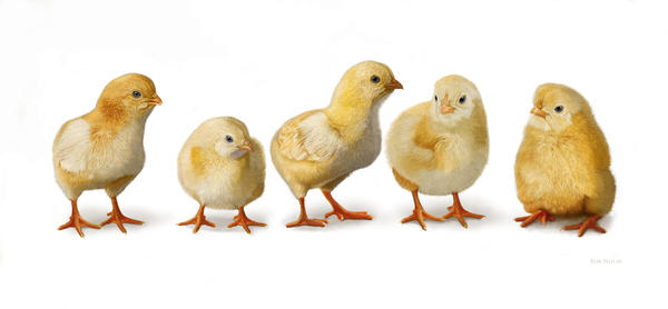 Five Chicks in a Row Digital Art