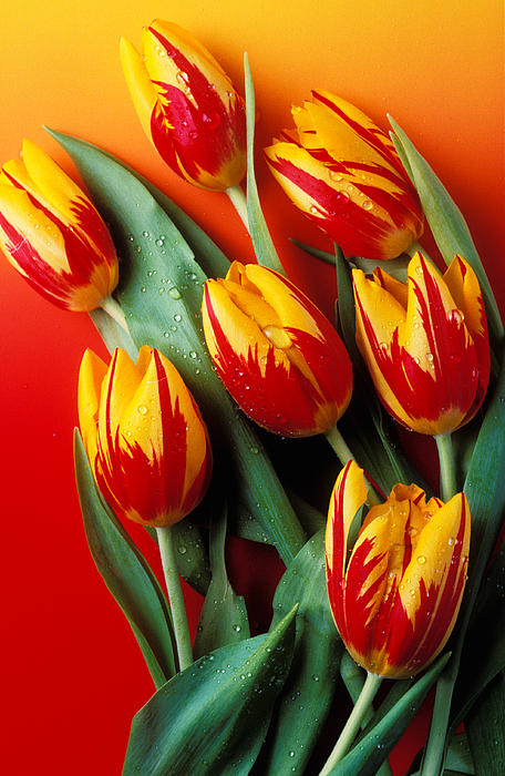 Flame Tulips Print by Garry Gay