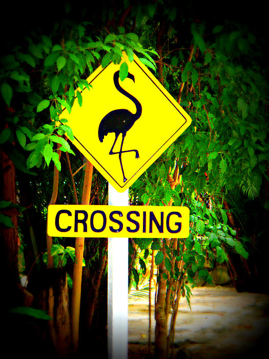 Kimberly Perry - Flamingo Crossing