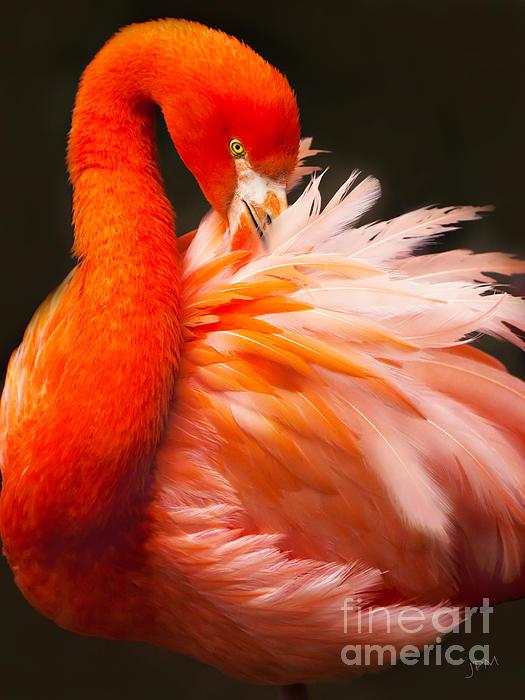 Joan McCool - Flamingo Fluff