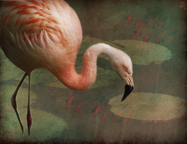 Tina Lindsay - Flamingo