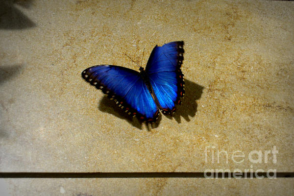 Flawed Beauti-fly Print by Nicole Tru Photography